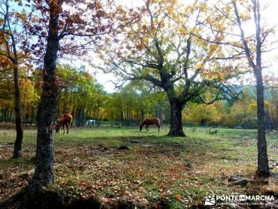 La Dehesa Bonita - Abedular de Somosierra_ senderismo en la sierra de madrid
